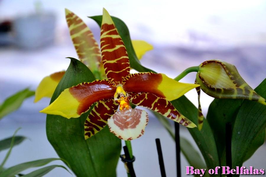 Ipomea Ischia 2015: Mostra mercato botanico piante rare ed inconsuete